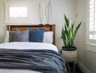 5 sleep enhancing bedroom plants