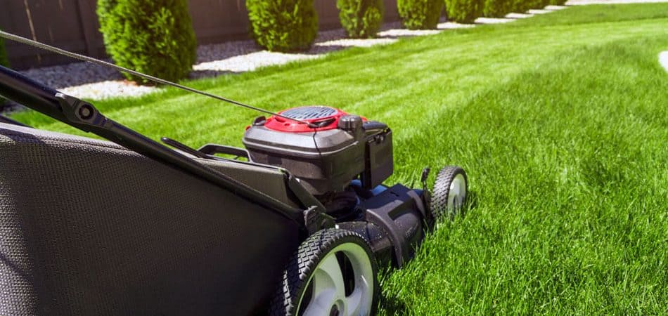 Lawn Care Tips to Make Your Grass Greener