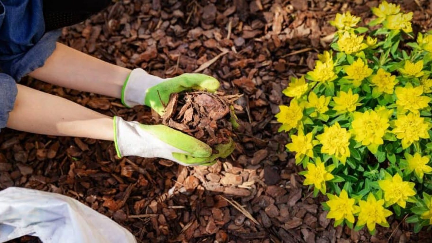 The Ultimate Guide to Mulching and Why Your Garden Will Thank You for It