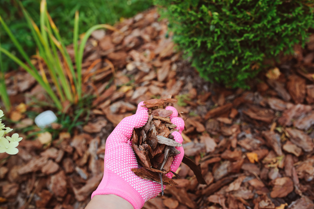 ultimate guide to mulching