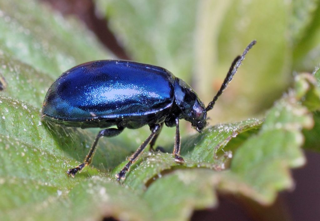 common garden pests
